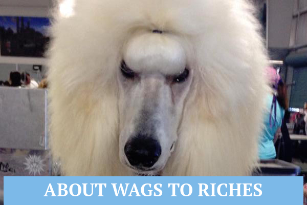 About Wags To Riches - Quality Pet Grooming