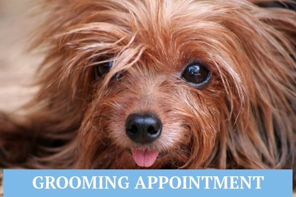 Appointment Wags To Riches - Florida Dog Grooming