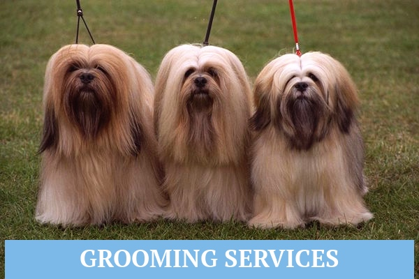 Services Wags To Riches - Florida Dog Grooming