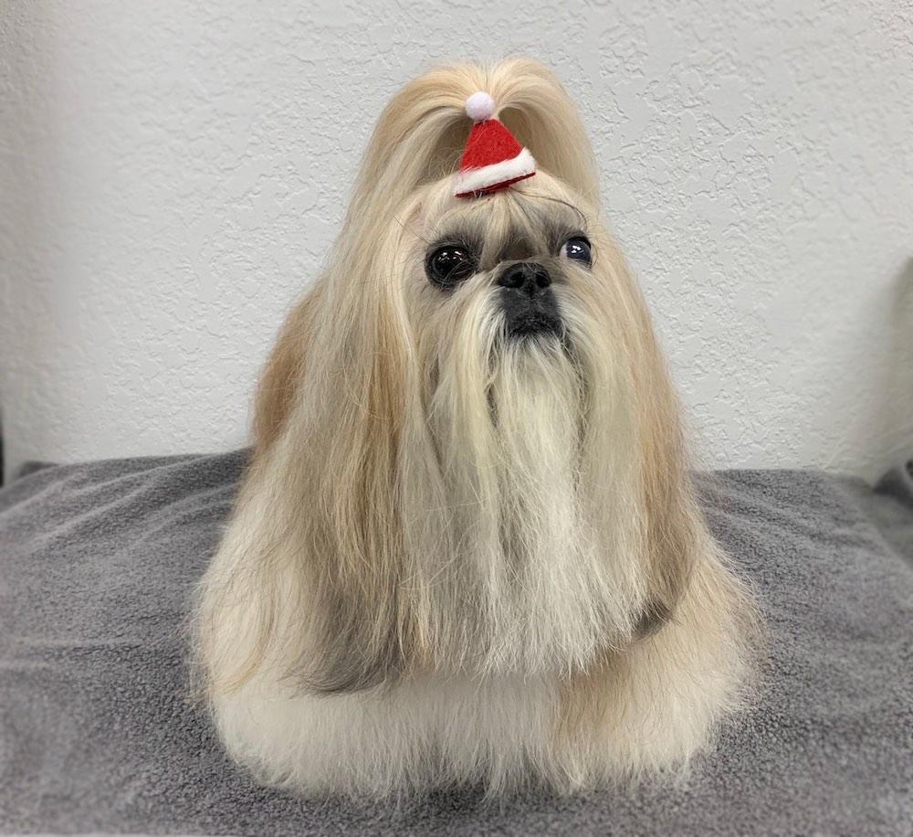Shih Tzu Florida Dog Groomer
